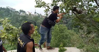 """Suksesnya EVAKUASI Monyet oleh """"FOREBAL"""" Yang Berhasil Di Kembalikan Ke Alam Liar"""