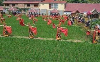 Mengemas Pagelaran Tradisional, Penari Gandrung Gemulaikan Tariannya Dipematang Sawah