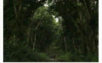 Alas Purwo Banyuwangi, Hutan Cagar Alam Yang Dikenal Mistis