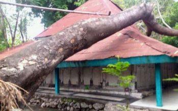 Pohon yang Timpa Bangunan Makam Keturunan Sunan Giri Berhasil Di pindah