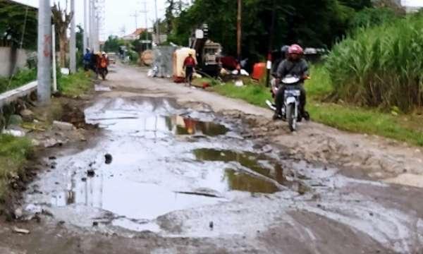 Pemkab Kurang Perhatian: Warga Rame Rame Tanami Pisang Jalan Yang Rusak Berat