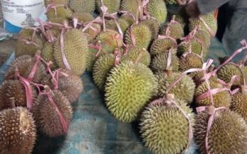Pemkab Lumajang Gelar Acara Serbu Durian
