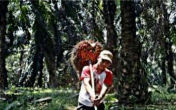 Lockdown di Malaysia Peluang Industri Sawit Indonesia Masih Terbuka